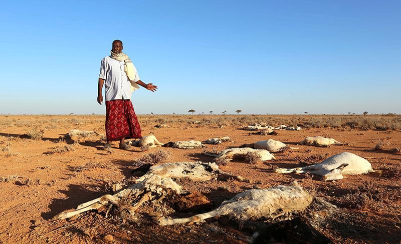 Kenya Declares Drought  a National Disaster