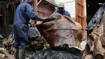 Hides and Skins Nabbed over Ksh75 M Export Duty